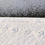 Vogelspuren im Schnee