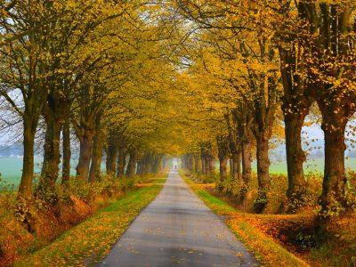 Allee im Herbst, Kühlungsborner Umland